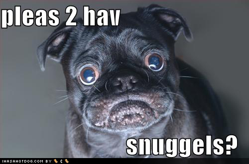 funny-dog-pictures-black-snuggle-pug